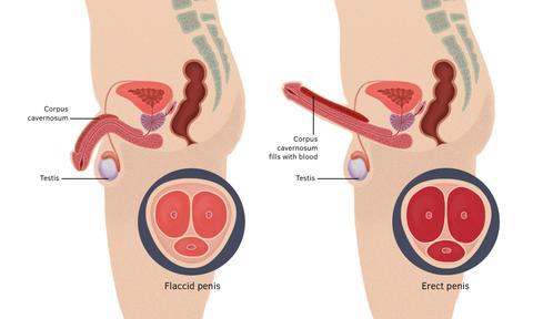 potentaxe - Potent Axe čaj za prostatu duži seks i potenciju